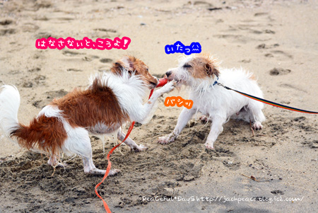 150721_umi13.jpg