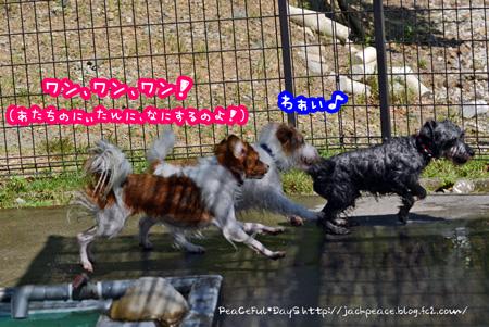 150726_pool14.jpg
