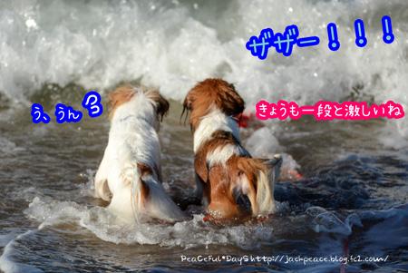 150726_umi1.jpg