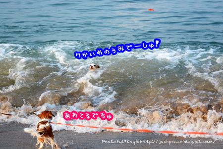 150809_umi.jpg