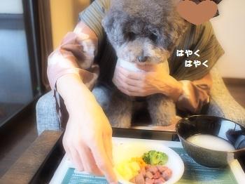 玉響の風ジジさんディナー20150709-5