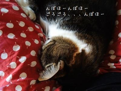 寝息が熱風銀