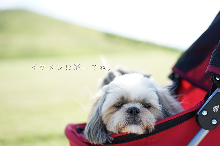 DSC00080_2313.jpg