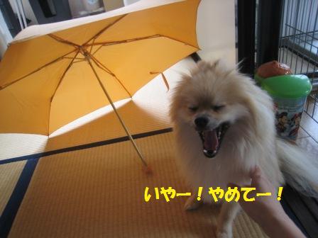 20150716_3.jpg