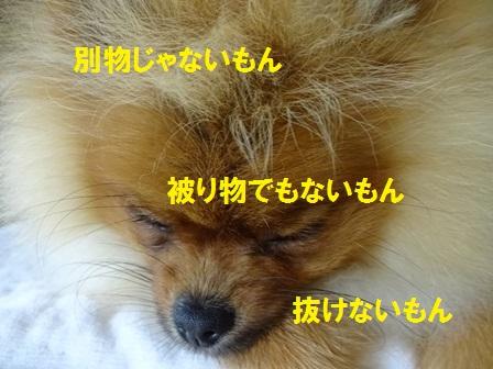 201508101438114c5.jpg