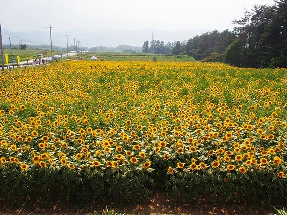 hokuto-20150802-13s.jpg