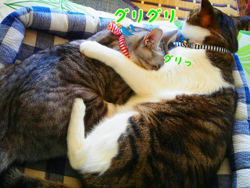 fc2_2015-06-30_11-21-50-748.jpg