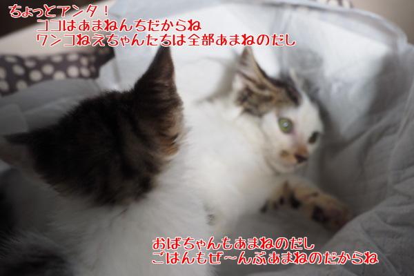 201507200924431fb.jpg