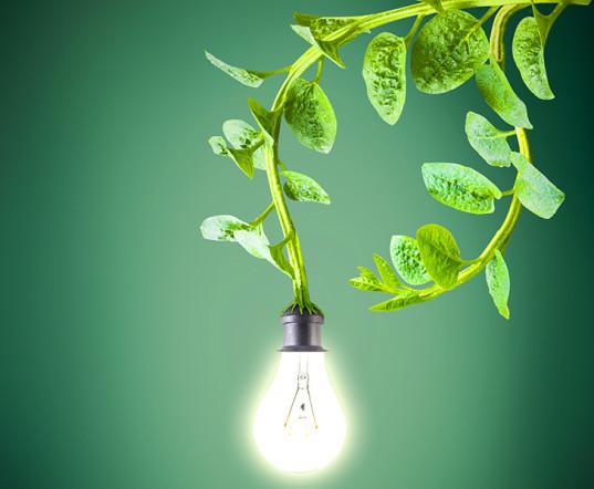 power-from-plants-537x442.jpg