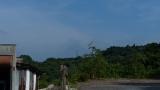 20150726原生の森42