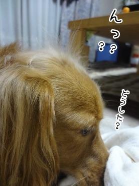 kinako3006.jpg