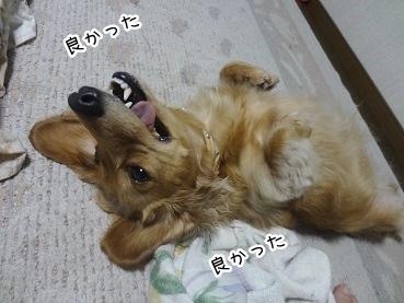 kinako3008.jpg