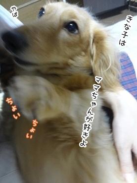 kinako3022.jpg