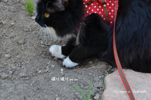 桜子ちゃん♪1048