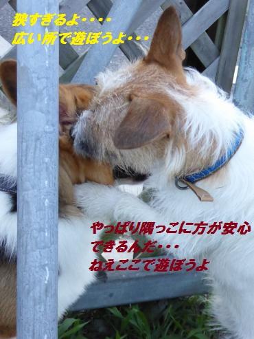 P1000023_convert_20150717130402.jpg