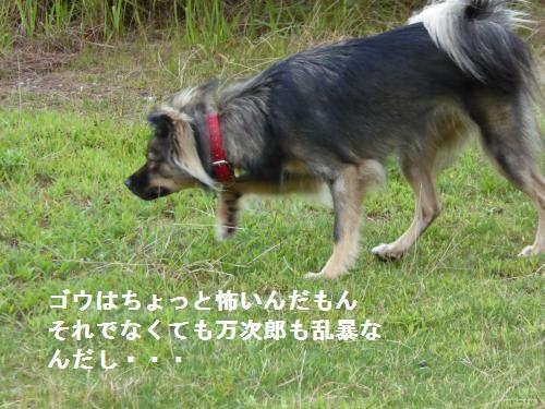 P1000041_convert_20150720083807.jpg