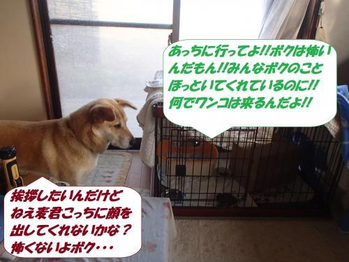 P6040158_convert_20150606101014.jpg