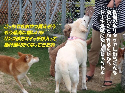 P7040444_convert_20150706111430.jpg