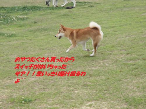 P7040445_convert_20150706111552.jpg