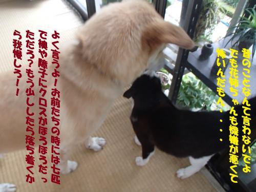 P7100499_convert_20150711084518.jpg