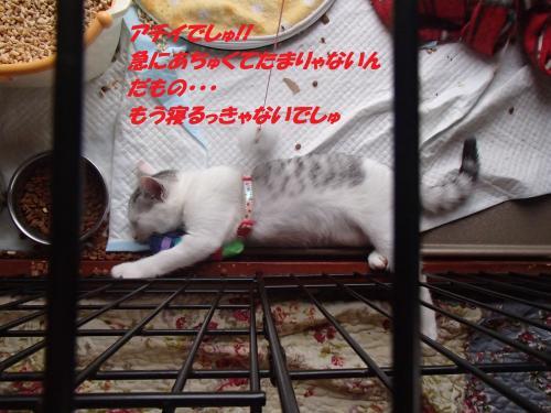 P7110505_convert_20150712093604.jpg