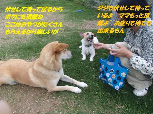 P7170540_convert_20150718095531.jpg
