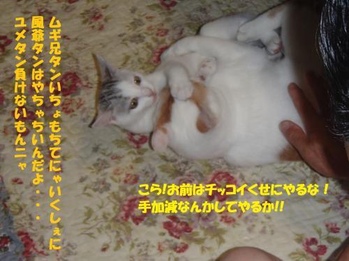 P7230585_convert_20150724131137.jpg