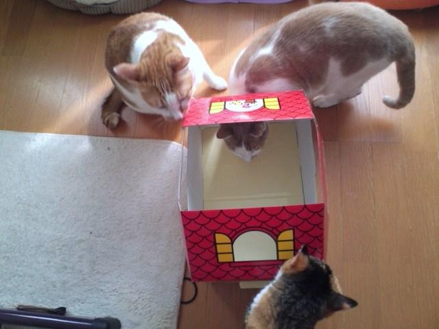 ねこのきもちふろく キティちゃん段ボールハウス