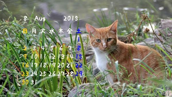 8月 猫カレンダー チャトラ猫さん