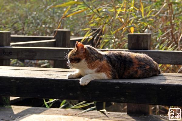 夏の夕暮れを楽しむ三毛猫さん♪