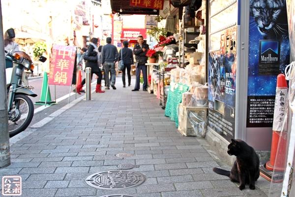 横浜中華街 黒猫