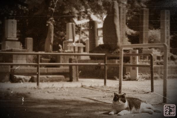 谷中霊園 野良猫
