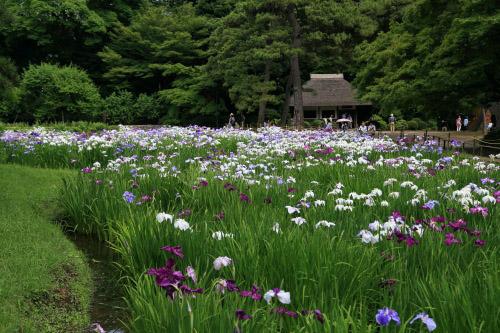 小石川後楽園 ・・・ サムネイル画像