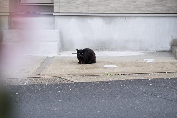 猫風景-10