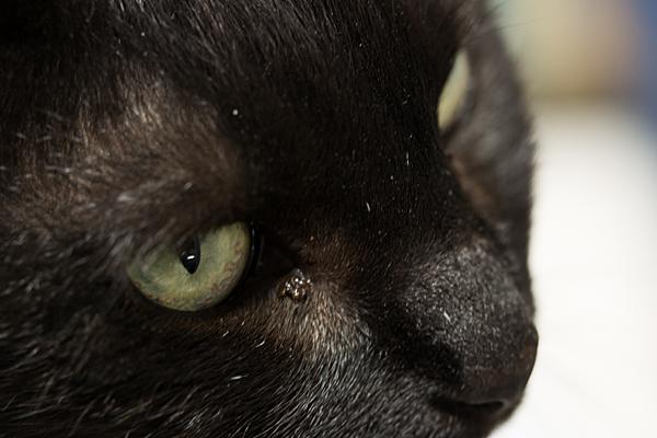 猫風景-11