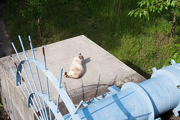 猫風景-8