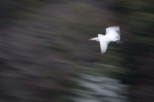 鳥風景-7