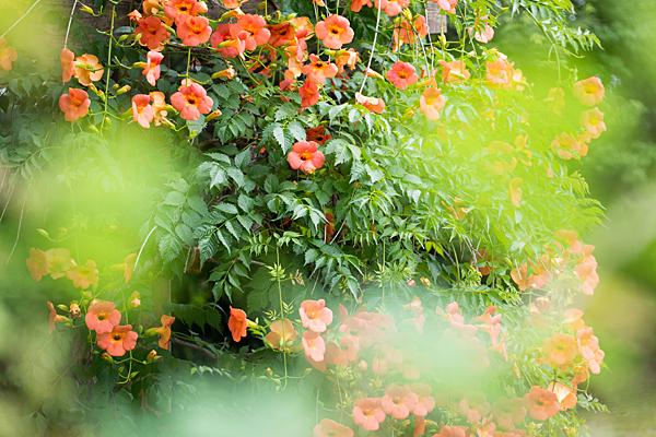 東山植物園-7