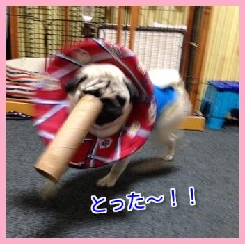 IMG_0385-1.jpg