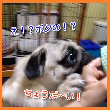 IMG_5152-1.jpg