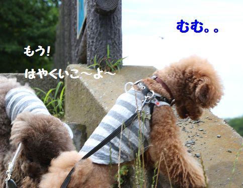 IMG_54502_20150707055108ab4.jpg