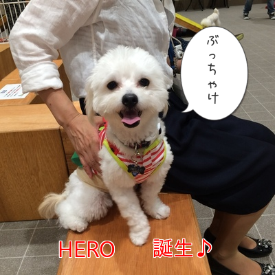 20150718213434a25.png