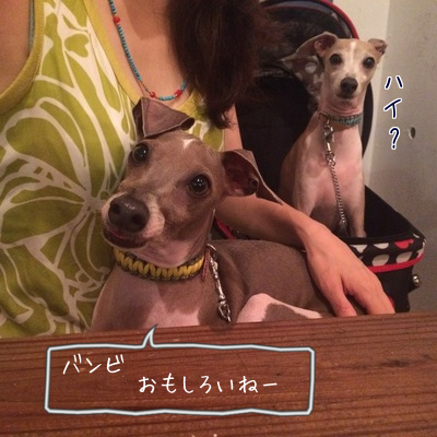 20150728190255545.png