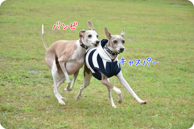 20150808174210b7a.png