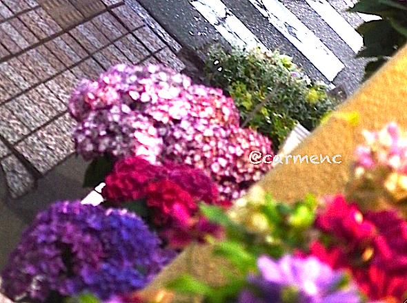 花屋さんの紫陽花