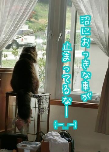 和室に7.jpg