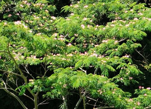 ねむの木.jpg