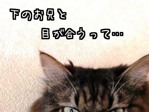 高いとこ~6.jpg