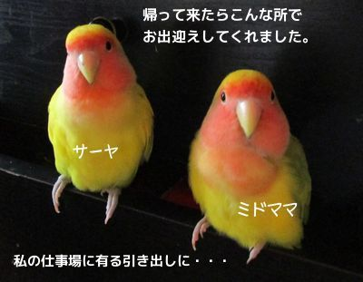 20150801153221a0b.jpg
