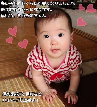 20150801153306904.png